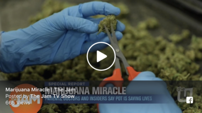 Marijuana Miracle
